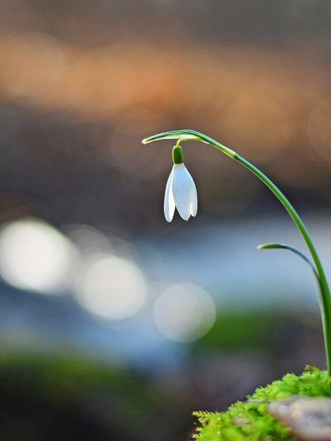 Das Gartengedicht Gefunden von Goethe