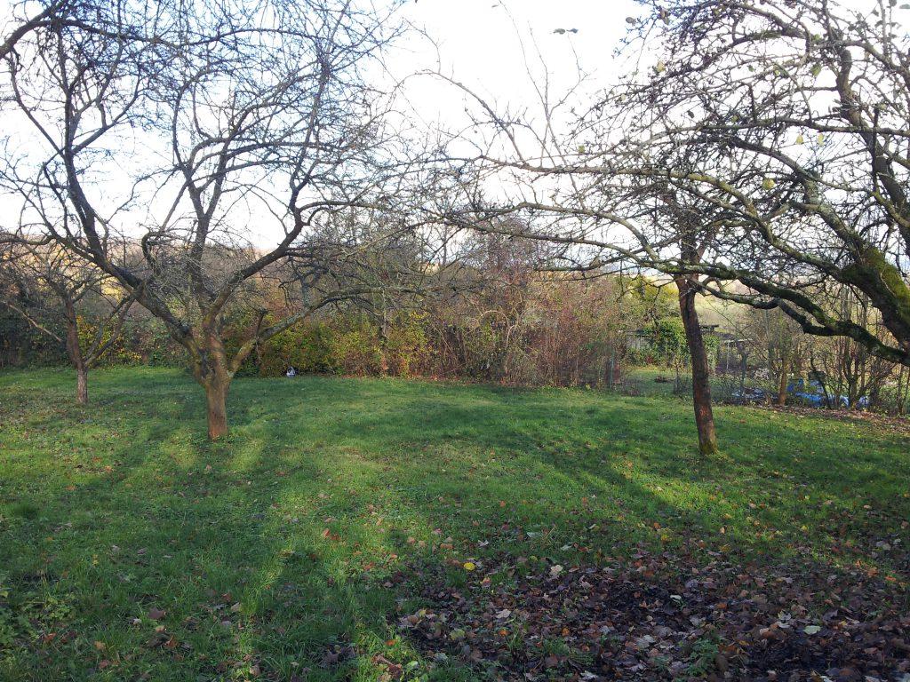 Der Pachtgarten bei Übernahme