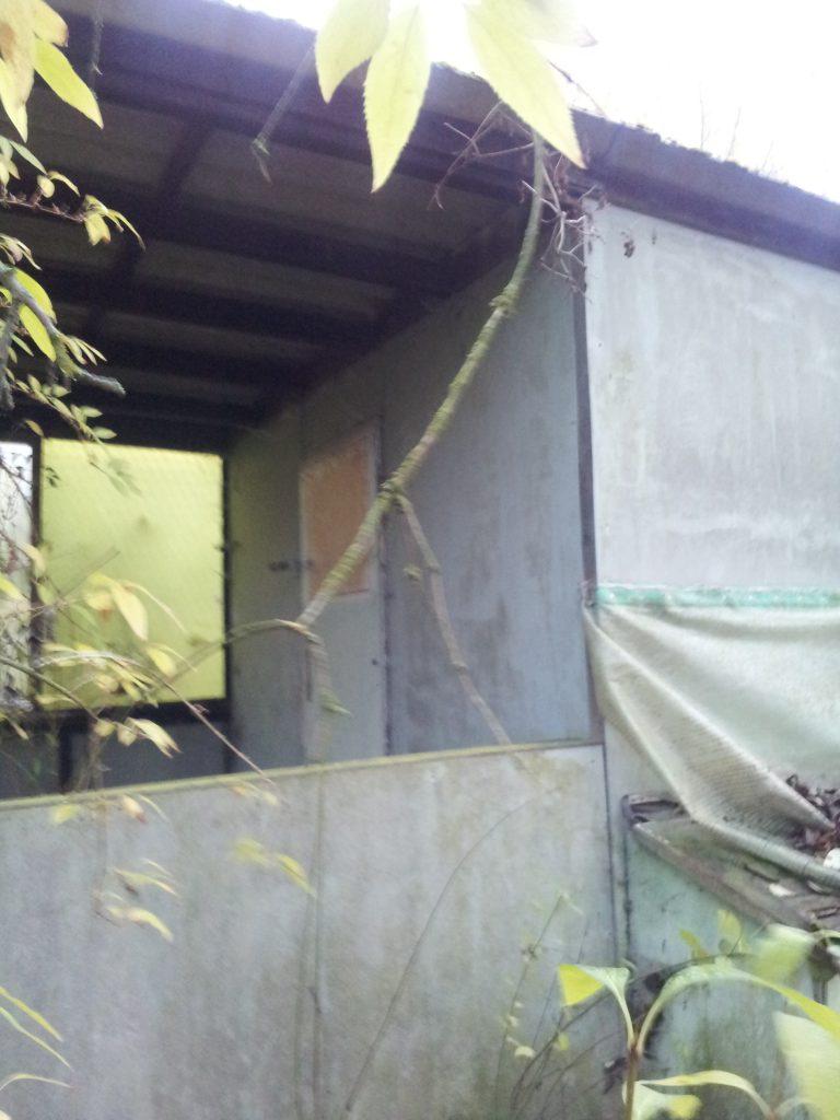 Die Gartenhütte im Pachtgarten vor der Renovierung
