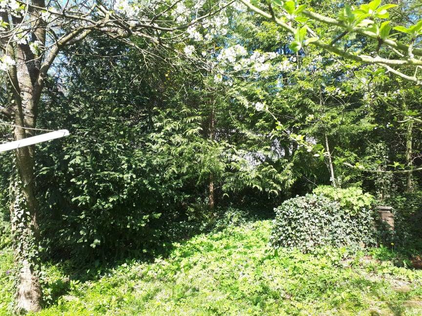 Der hintere Teil des Gartens bei Übernahme des Hauses