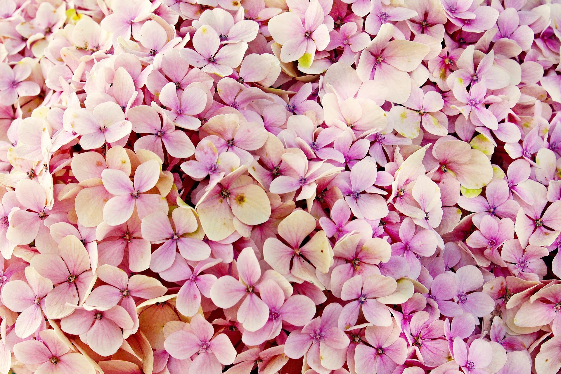 Blume für romantische Gartengestaltung