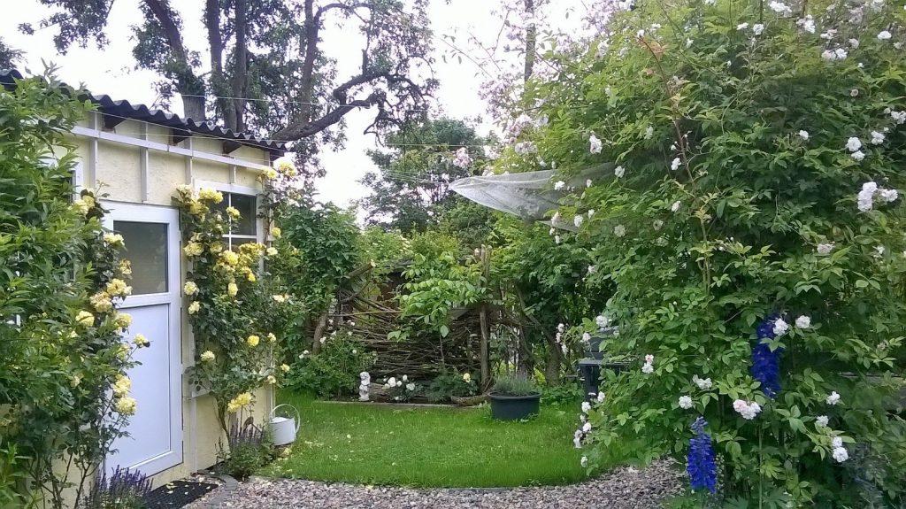 Das romantische Gartenhaus im Pachtgarten, berankt mit Rosen.