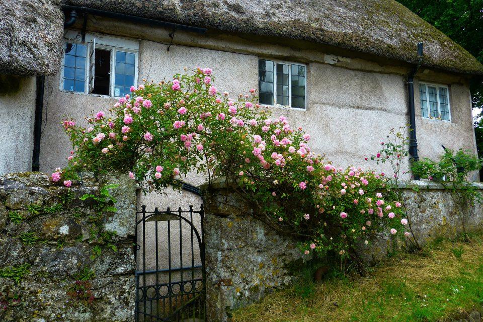 Ein romantischer Garten entsteht Stück für Stück. Hier sieht man eine alte von Rosen umrankte Gartenpforte, die verheißungsvoll und spannend wirkt.