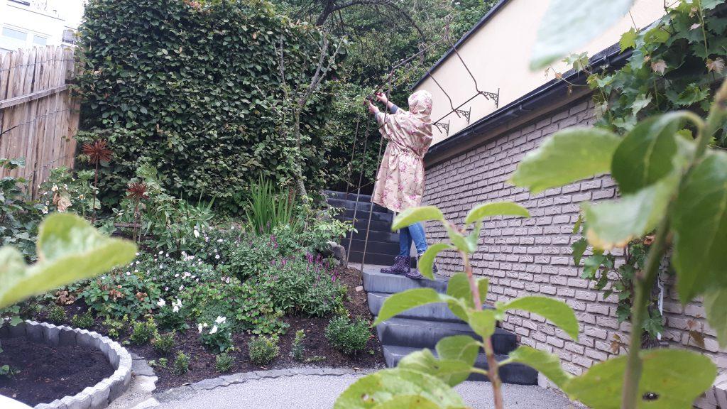 Der Regen tut dem neu angelegten Beet gut