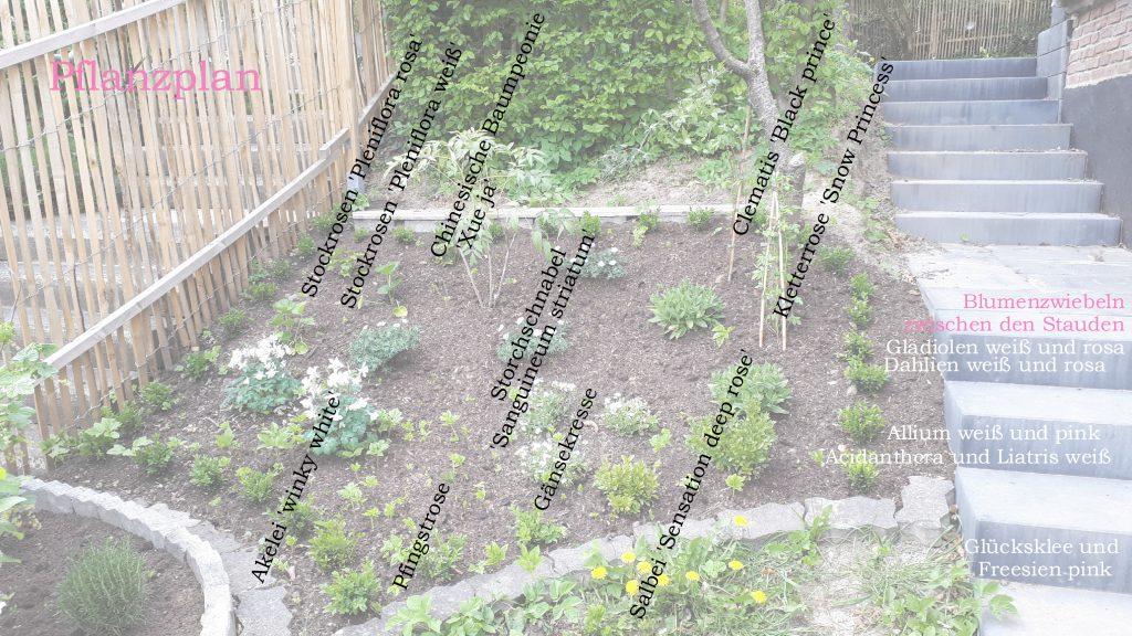 Pflanzplan Hang an der alten Kirsche
