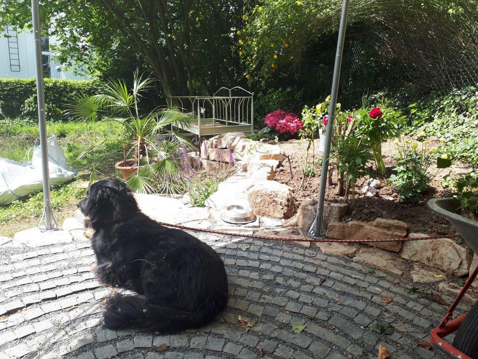 Blick aufs Gartenbett im ersten Gartenjahr