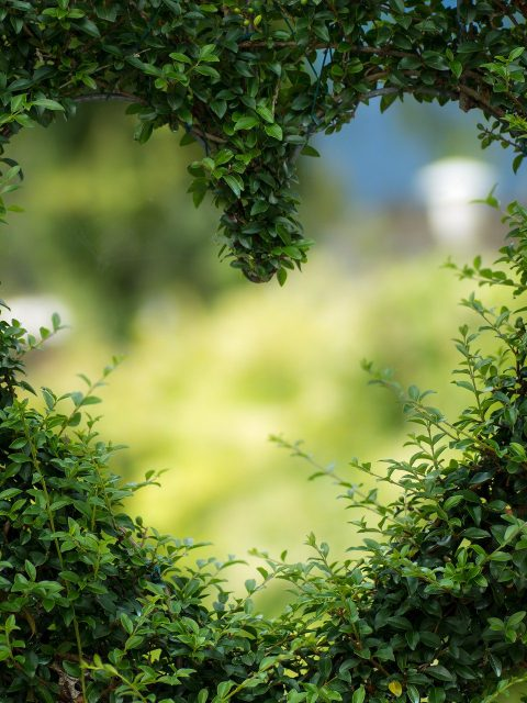 Sicher haben Valentins Muffel das grüne Herz am rechten Fleck. Aber man sollte sich einmal mit der Geschichte des Valentinstags auseinander setzen.