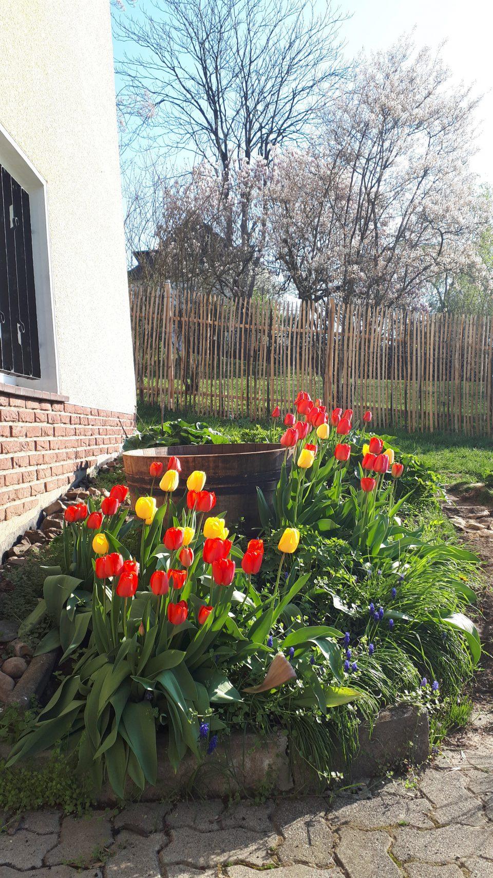 Neben der Eingangstür wurde ein halbiertes Weinfass als Auffangbehälter für Regenwasser sowie für ein Wasserspiel platziert. Im Frühjahr blühen rund herum Tulpen, Traubenhyazinthen und Akkelei.