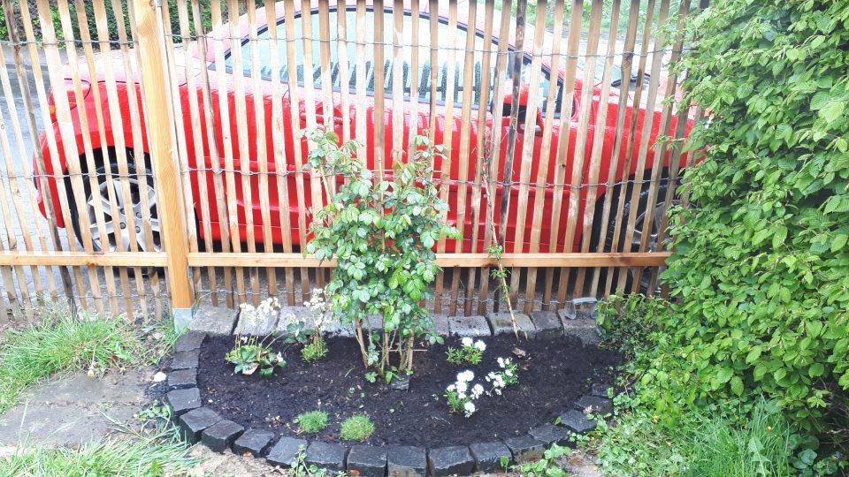 Ein kleines halbrundes Beet am Staketenzaun, als Teils des weißen Gartens. Hier ganz frisch angelegt.