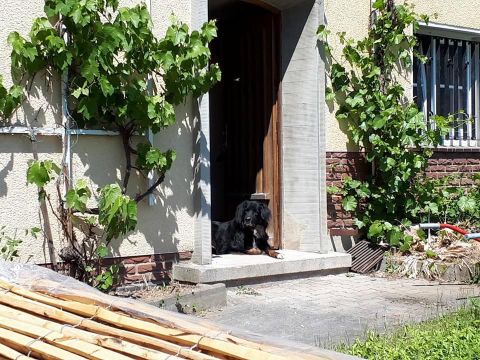 Wachhund in der Haustür, vor der Sanierung
