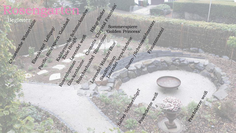 Der Rosengarten mit dem Pflanzplan meiner Rosenbegleiter