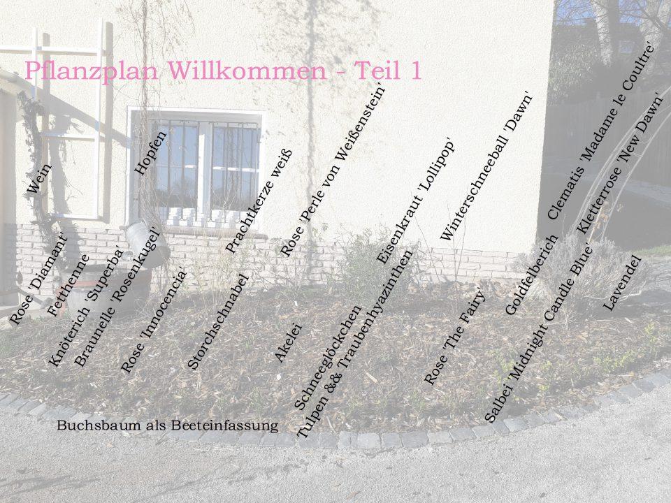 Der Pflanzplan für das Beet neben der Haustür. Hier sind ebenfalls Rosen gepflanzt