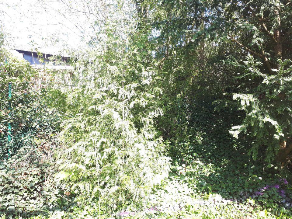 Der Romantikgarten war vor der kompletten Neugestaltung wild und weitestgehend ungepflegt.