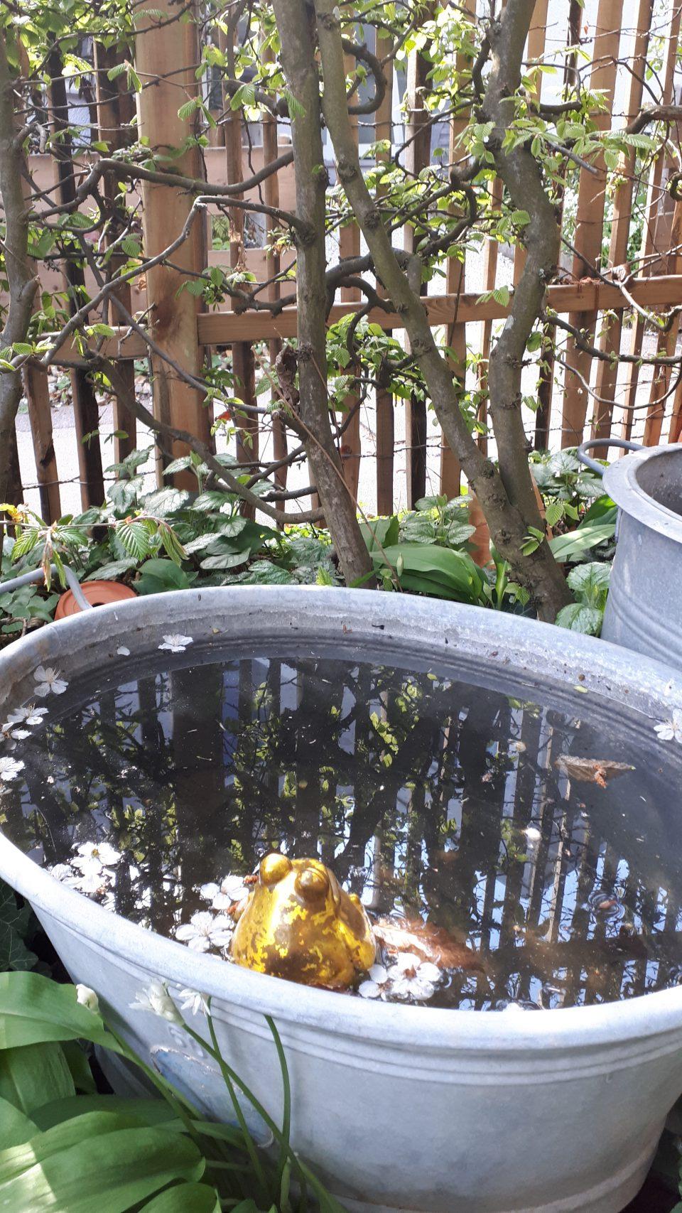 Die Zinkwanne als Miniteich hat nicht gut funktioniert da Blätter und Früchte hinein gefallen sind.