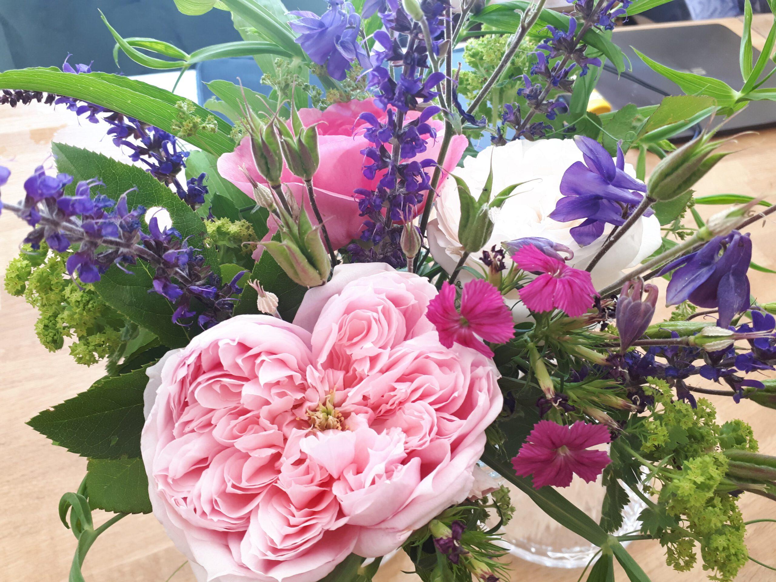 Auch Salbei und Phlox eignen sich als Rosenbegleiter.