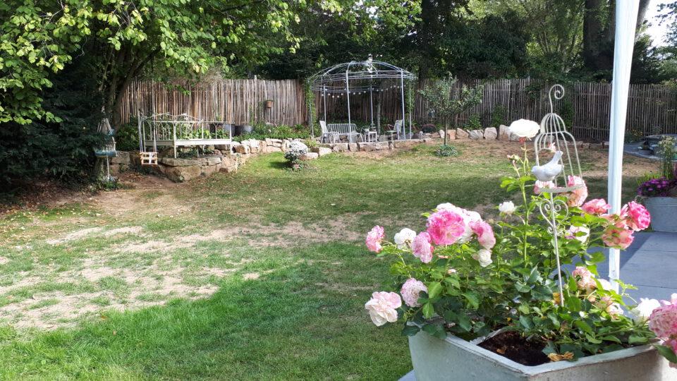 Meine Rosensorten, hier die Zwergrose Schneeküssen noch im Kübel. Später ist sie in das Beet im Eingangsbereich umgezogen.