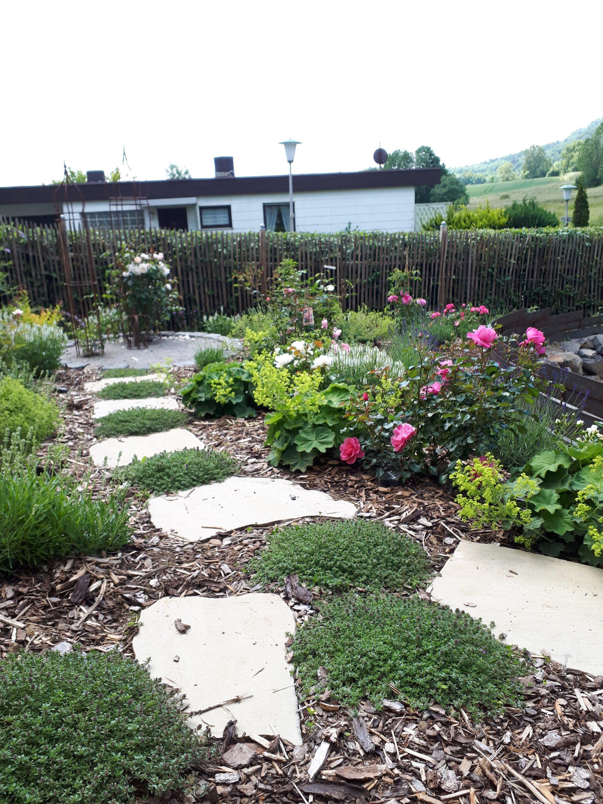 Der Rosengarten im ersten Gartenjahr 2020. Zwischen den Trittplatten sitzt Sandthymian als bodendeckender Rosenbegleiter.