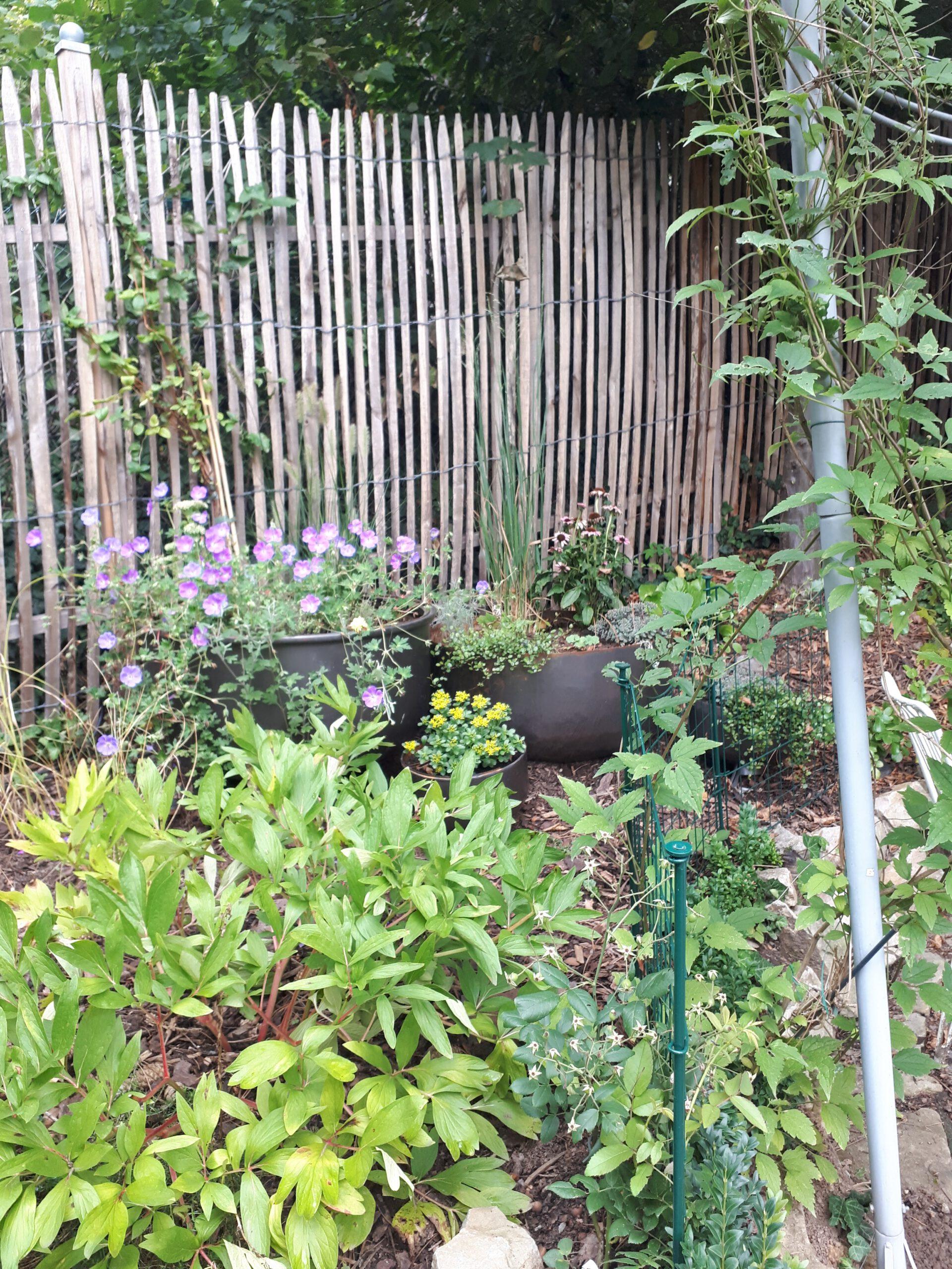 Die Ausdehnungsgefäße die ich zunächst als Miniteiche genutzt habe, sind inzwischen zu großen Pflanzschalen geworden die mir dabei helfen den Problemstandort rund um den Rosenpavillon zu begrünen.