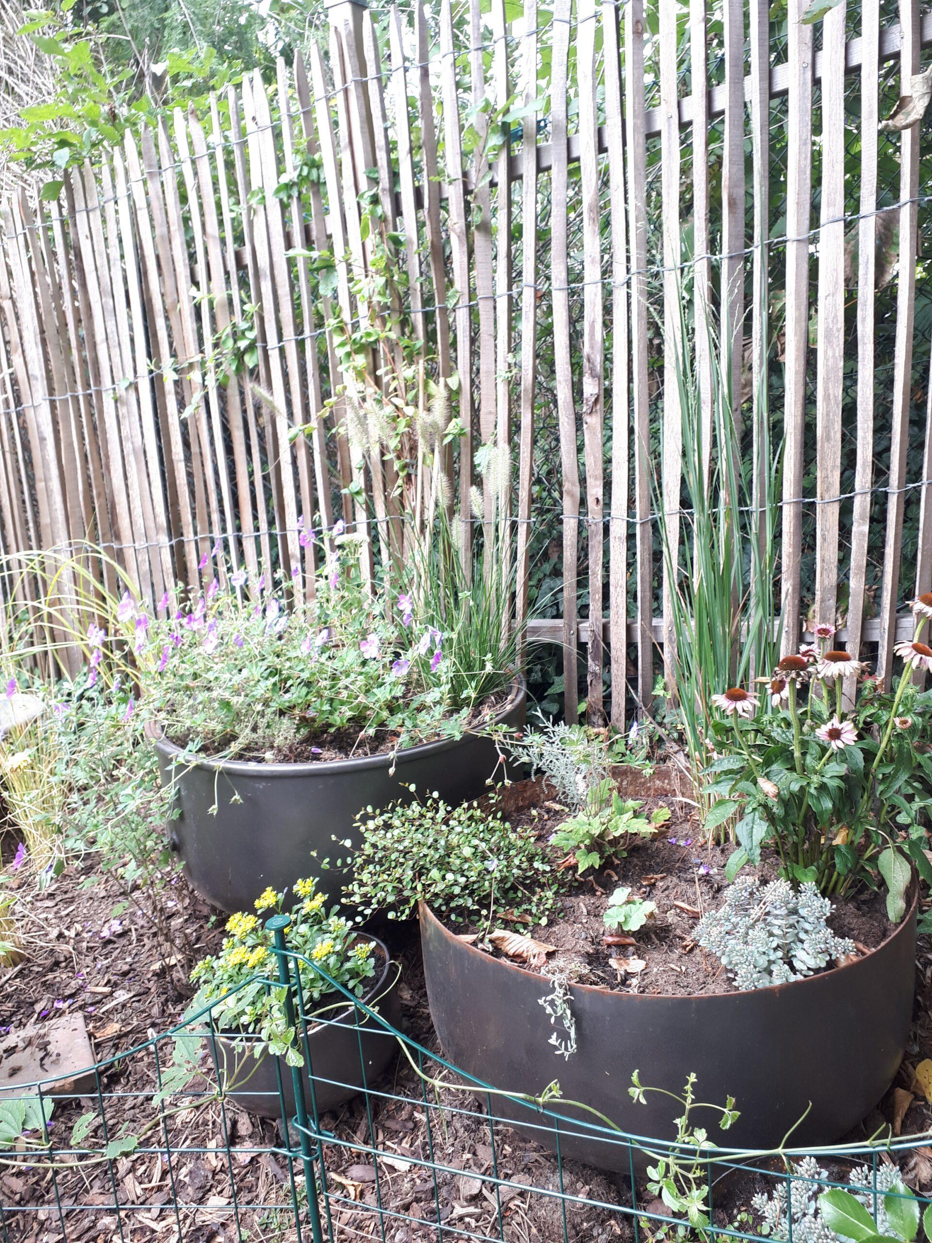 Die vormaligen Miniteiche sind nun bepflanzt um den schwierigen Standort doch noch zu begrünen
