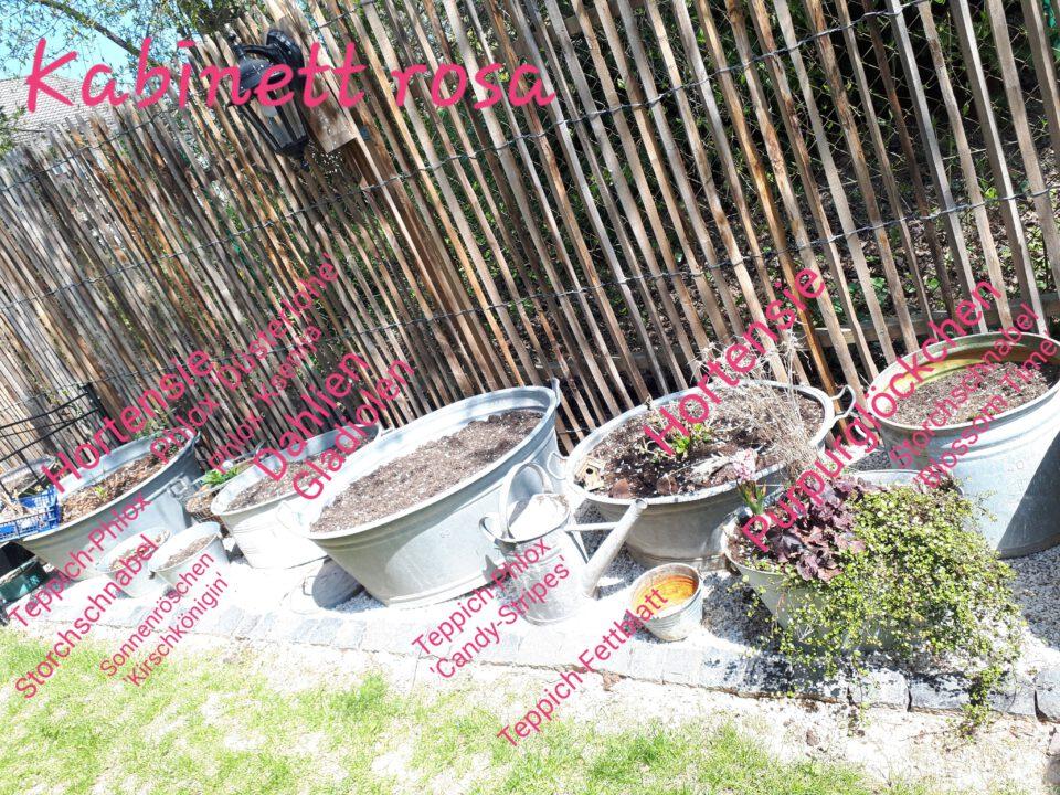 Mein Staudenglück in rosa und pink. Alles in Zinkwannen gepflanzt.