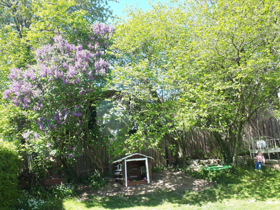 Unser kleines Baumhaus steht geschützt unter den großen Bäumen im Garten.