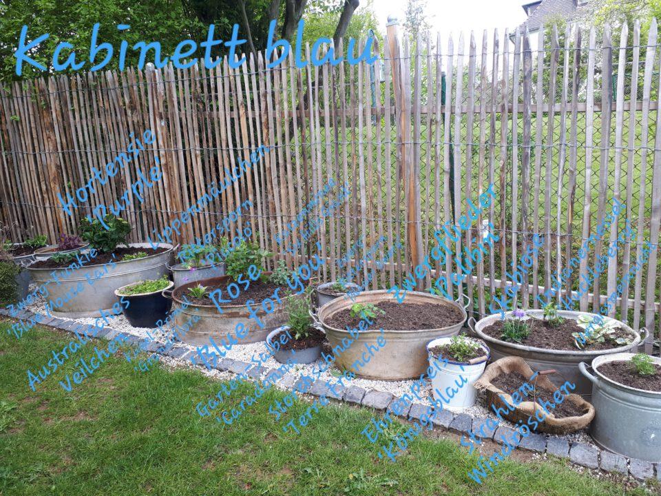 Ein Staudenbeet habe ich der Farbe blau gewidmet. Auch hier ist alles in Zinkwannen gepflanzt.