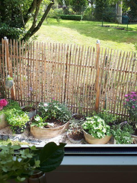 Der Blick aus dem Küchenfenster auf die zahlreichen bepflanzten Zinkwannen.