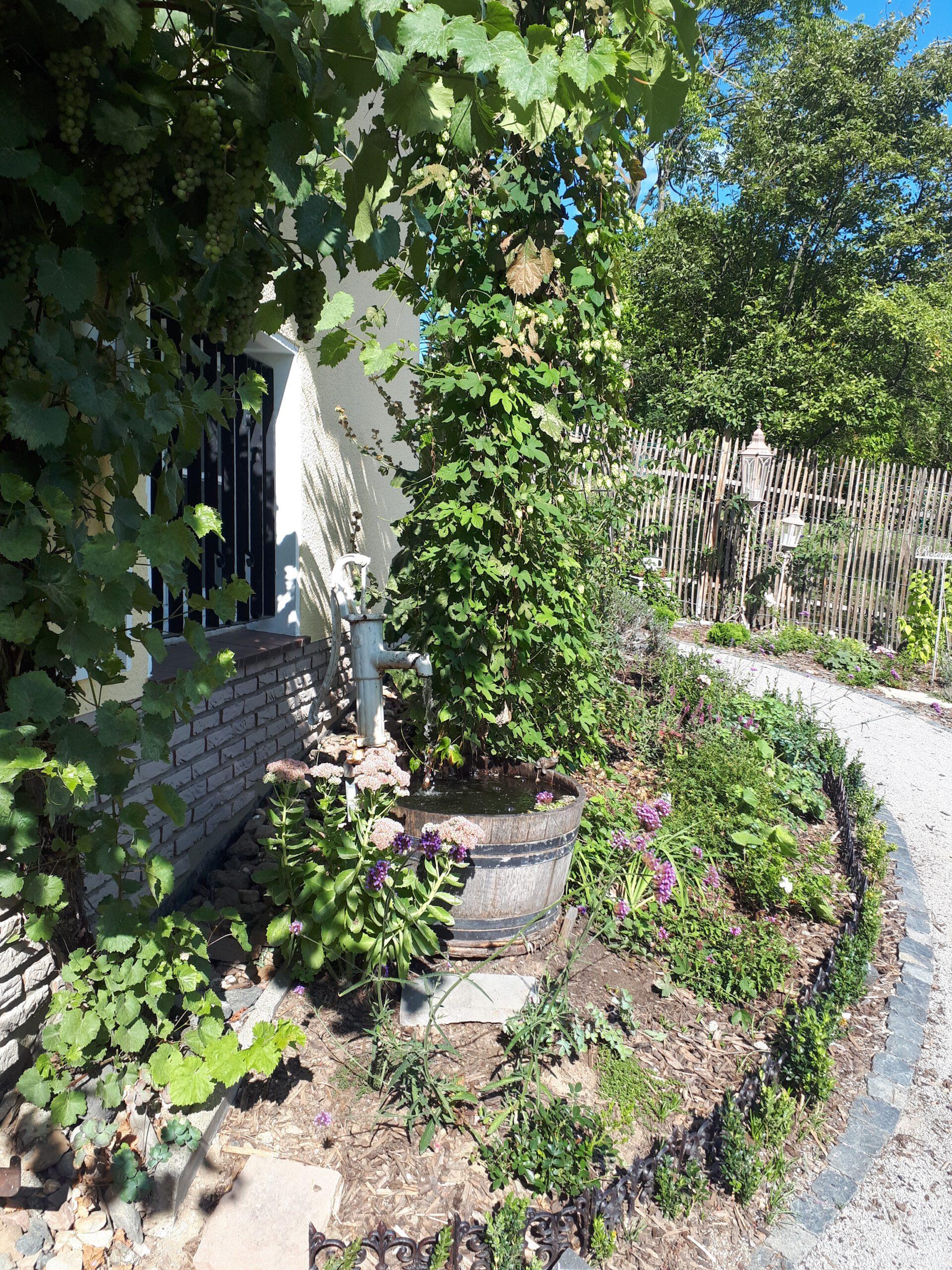 Neben der Haustür liegt das Beet das bis zur Hausecke reicht. Hier ist das Weinfass mit der alten Wasserpumpe als attraktives Objekt platziert. Romantische Gärten leben von Abwechslung und verspielten Elementen.