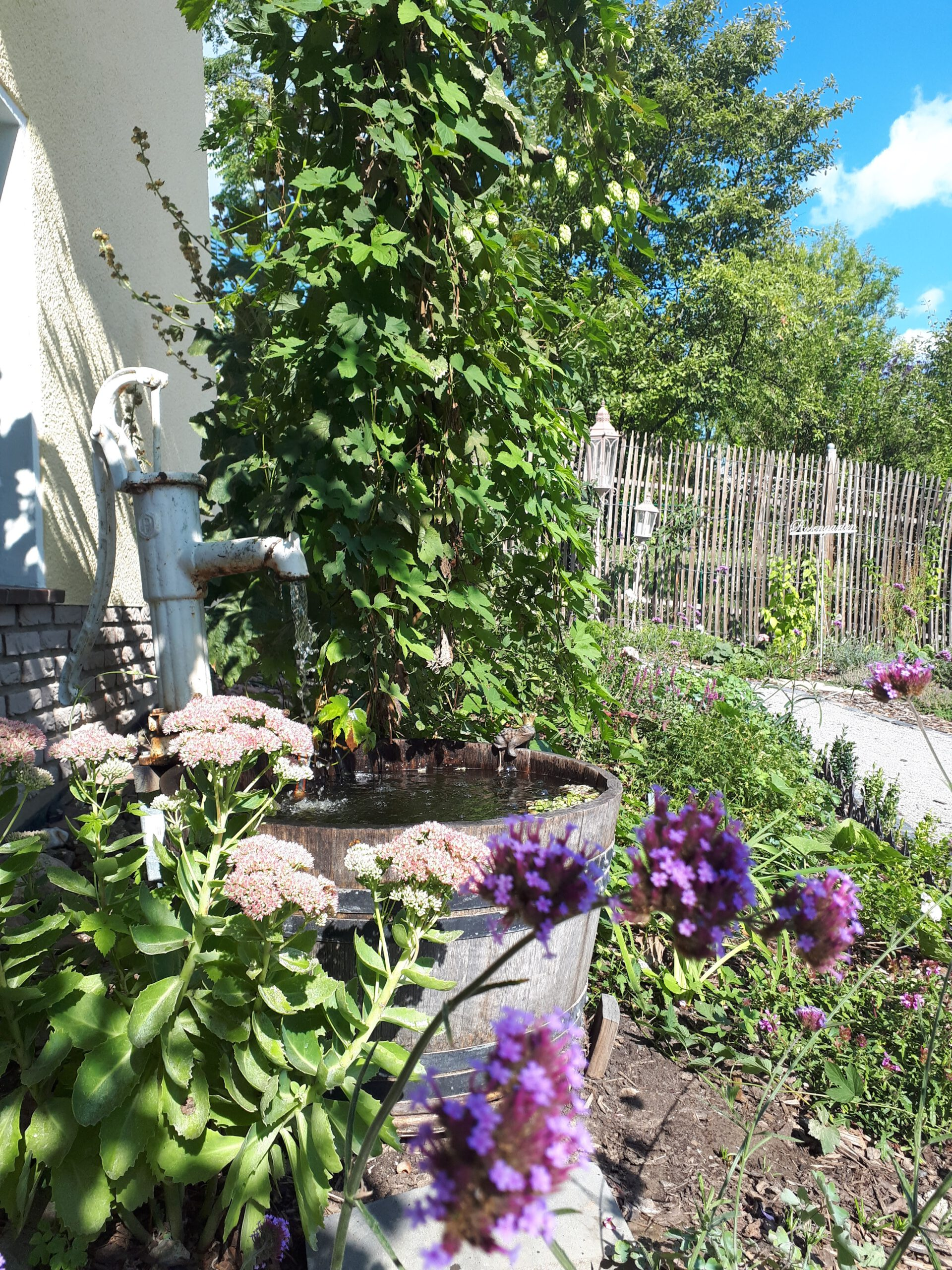 Romantische Wasserspiele im Garten haben einen besonderen Reiz. Die verspielten Elemente machen einen Romantikgarten so reizvoll. Hier ist ein halbiertes Weinfass mit einer alten Wasserpumpe versehen worden. Im Vordergrund blühen Fetthenne und Eisenkraut als typische Verteter eines Staudengartens.