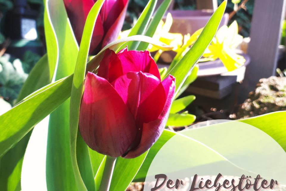 Der Liebestöter ist ein kurzer Gartenkrimi der für den Bookdate Contest 2021 geschrieben wurde