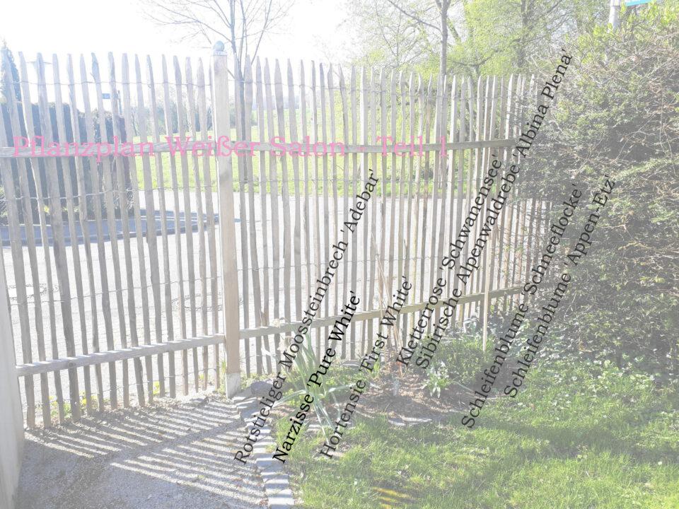 Pflanzplan für eines der Beete im Weißen Garten, inklusive Kletterrose am Staketenzaun.